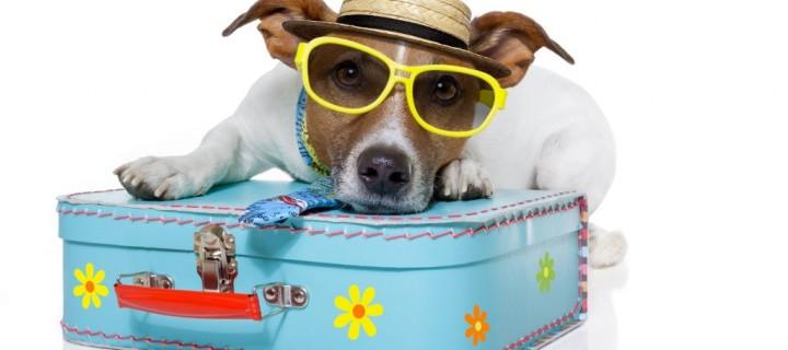 Vou viajar no carnaval! Melhor ir de carro ou de avião?